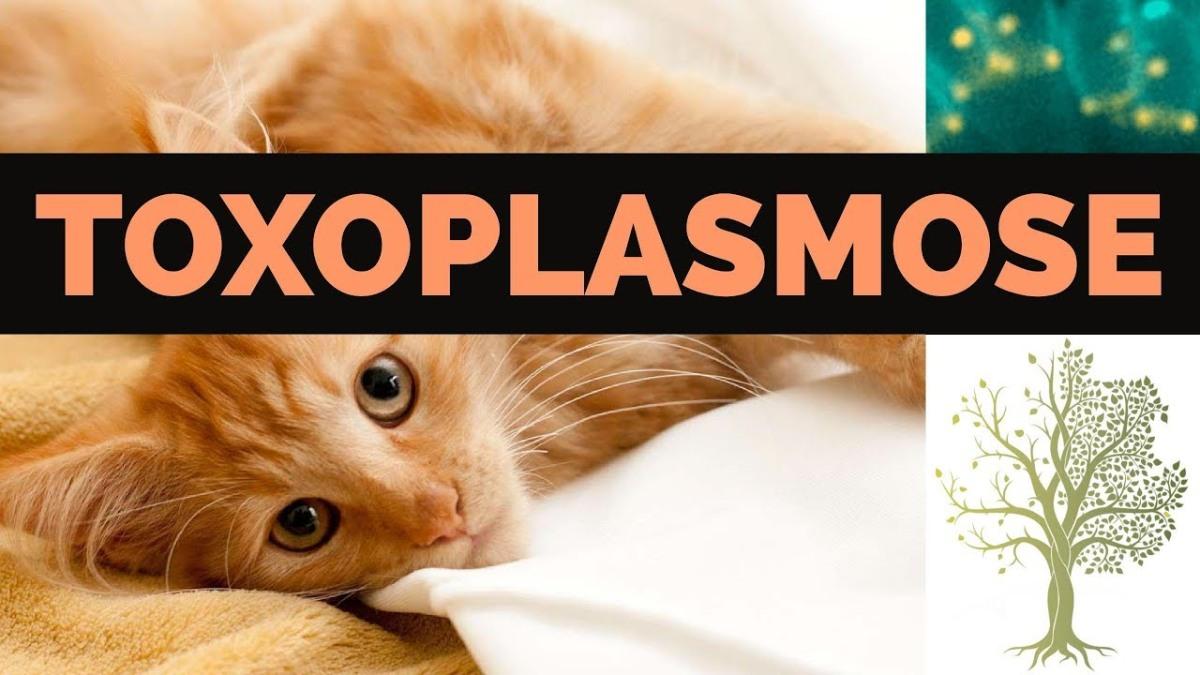 Tous sur la Toxoplasmose